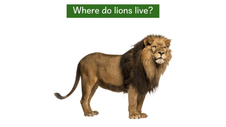 We all live on earth - Where do lions live?.004