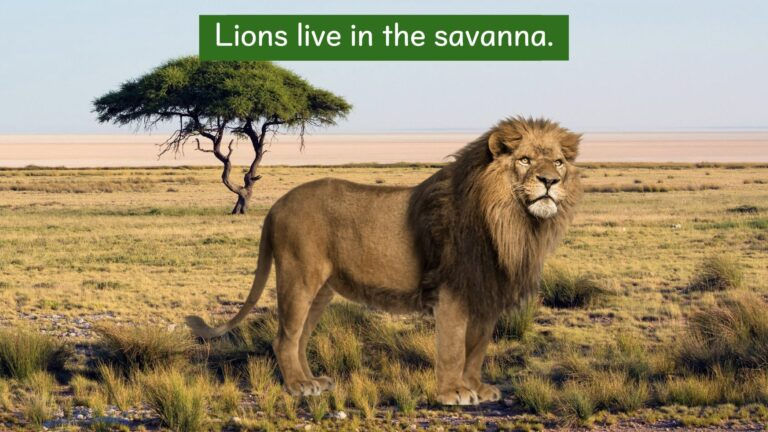 We all live on earth - Where do lions live?.005