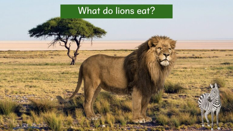 We all live on earth - Where do lions live?.006