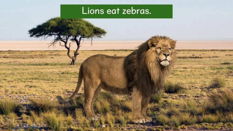 We all live on earth - Where do lions live?.007